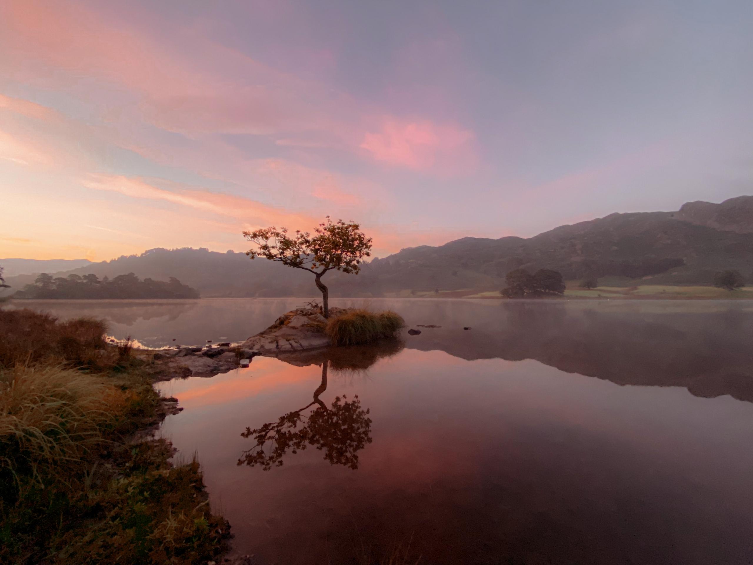 a lone tree at sunrise rydal water in cumbria